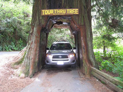 Tour-Thru Tree