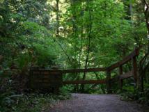 Simpson-Reed Grove Trail